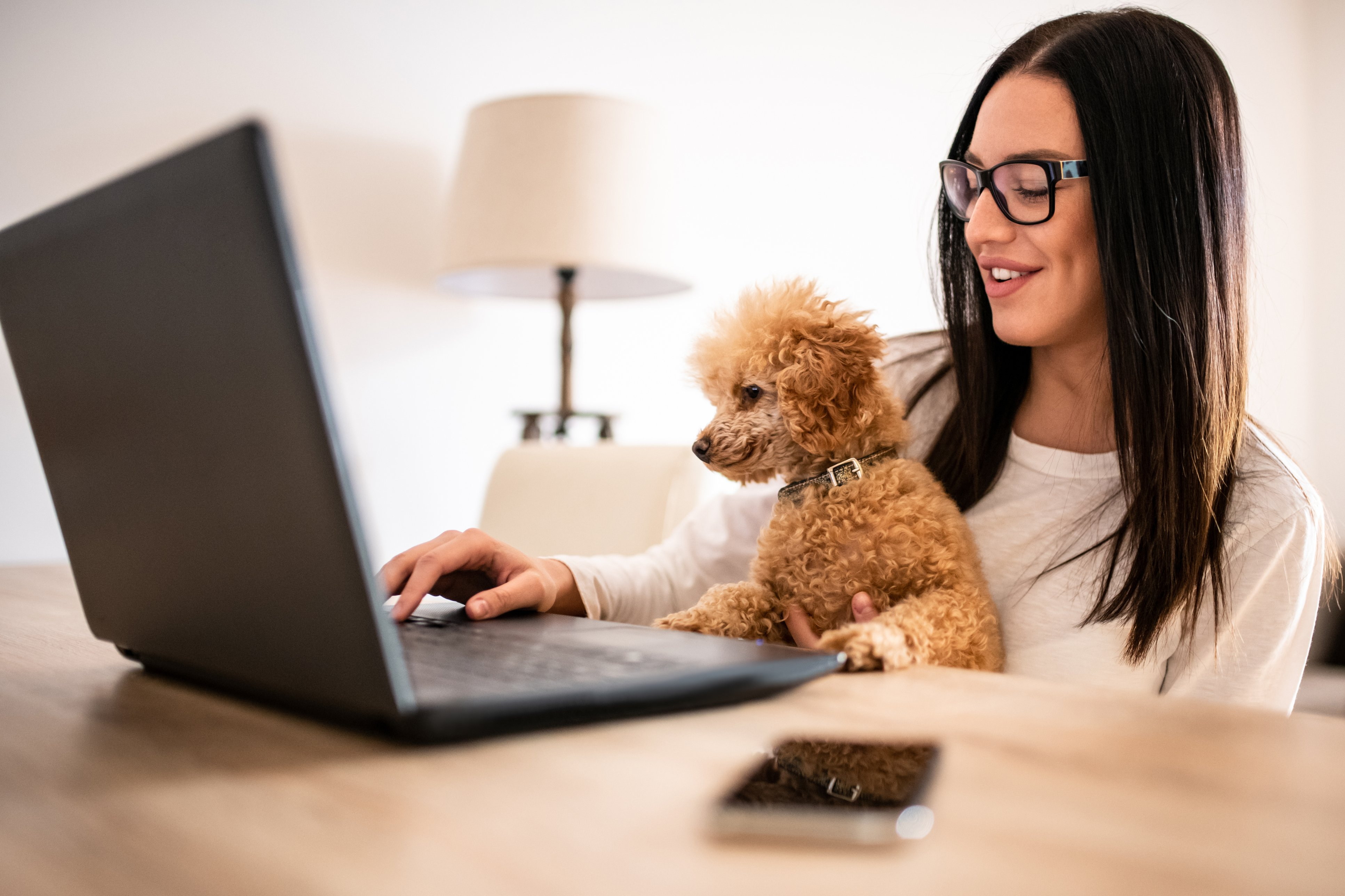 Dog & Owner online shopping
